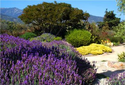 Seaside Gardens Mediterranean Garden